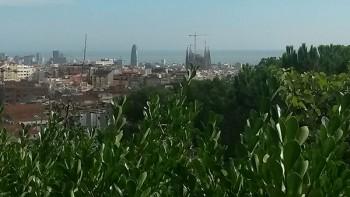 Vista de Barcelona des del mig aire del Turó. A la imatge destadaca, conjunt de palmeres. Fotografies de Maria Josep Tort