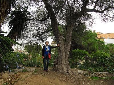 L'oliverot. Fotografia de M. J. Tort