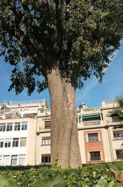 A dalt, palmera washingtònia, a sota lledoner. A la fotografia destacada, l'estany. Fotografies de M. Josep Tort