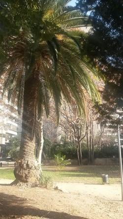 A dalt, detall d'un àlber i, a sobre, una palmera dels jardins del doctor Samuel Hanhemann. Fotografies de M. Josep Tort