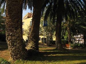 Conjunt de palmeres del centre del jardí . Fotografia de M. Josep Tort
