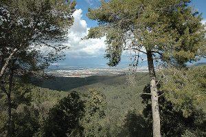 Dues vistes des de Collserola; a dalt cap a mar, a sota cap al nord. Fotografies de Ariadna Coten